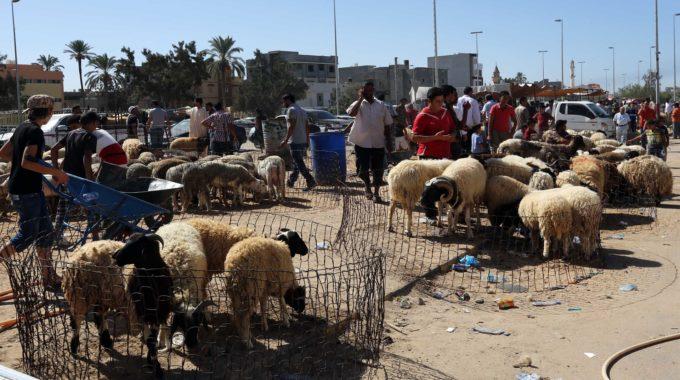 وزارة الاقتصاد تتوقع وصول نحو 300 ألف من الأغنام قبيل العيد